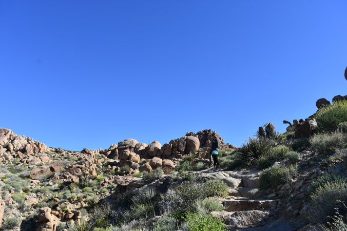 landscape of hike trail